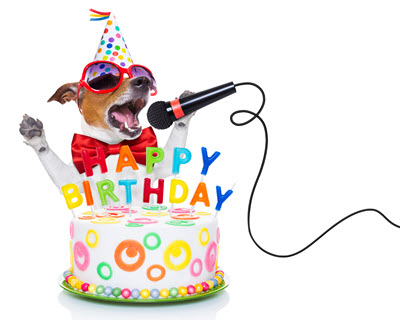 birthday hamper ideas dog singing birthday cake